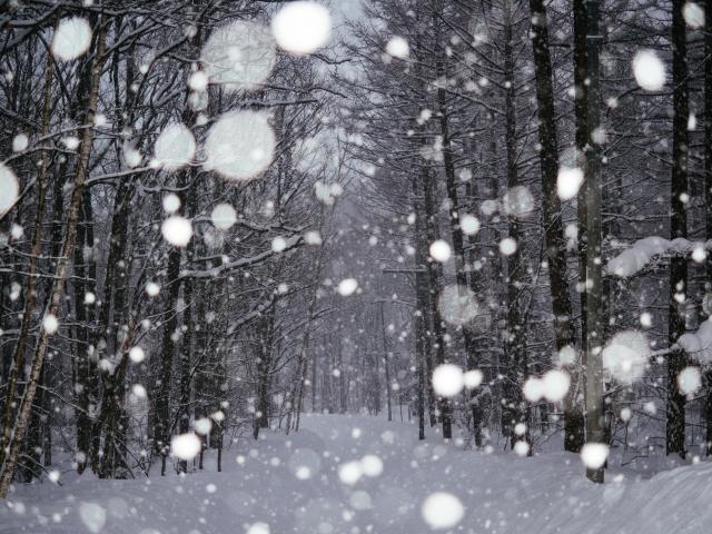 大雪と販路ポートフォリオ